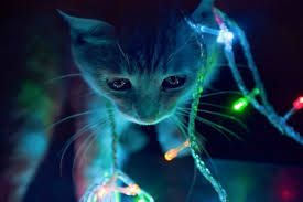 catdraw